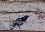 birdy