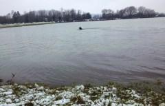 swimming in field