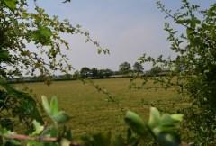 Bosworth field