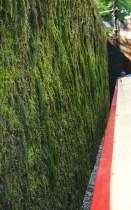 moss in Marple flight