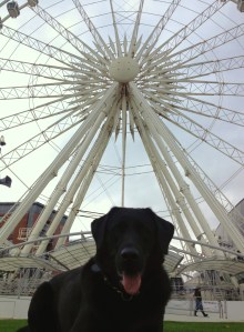 murk and liverpool wheel