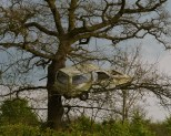 car in tree - Stratford-on-Avon canal