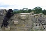 Murk on stone wall