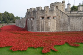 Tower and poppies